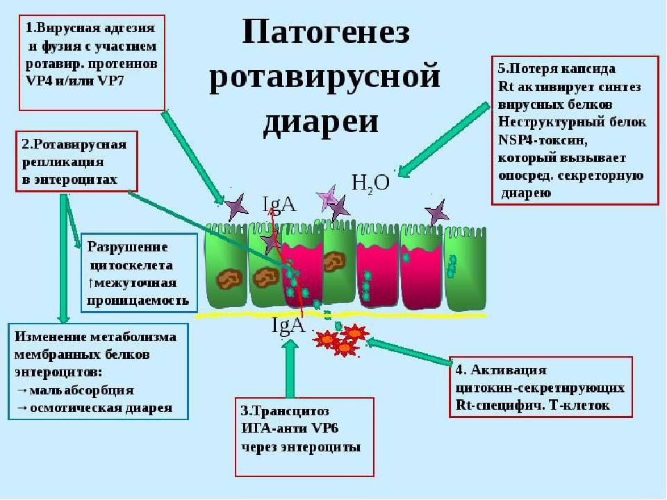 Серная мазь при демодекозе : инструкция по применению | компетентно о здоровье на ilive