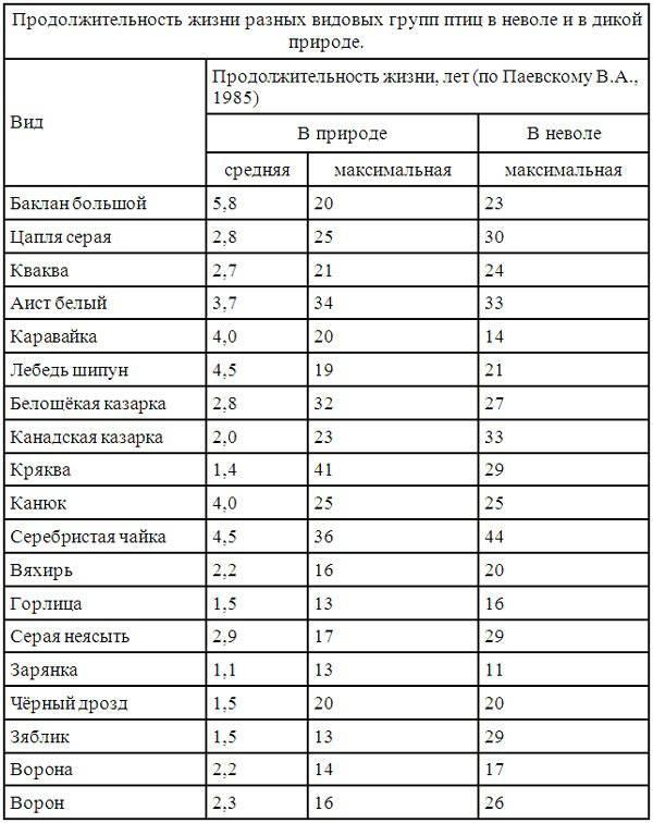 Русский кокер спаниель собака. описание, уход и цена русского кокер спаниеля