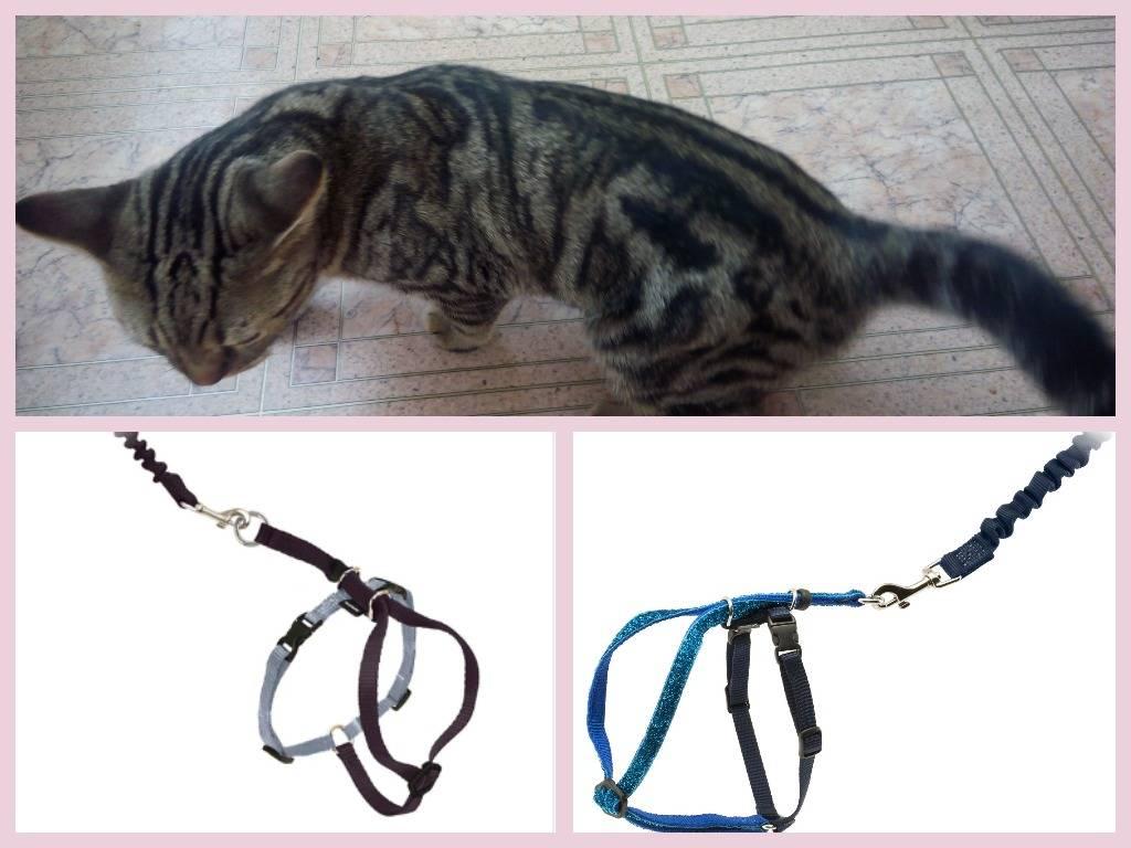 Шлейка и поводок для кошки своими руками
