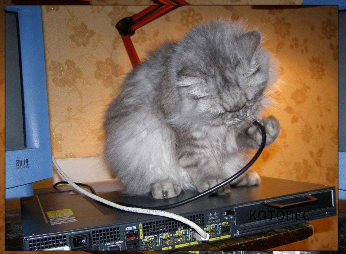 Как отучить кошку грызть провода, что делать