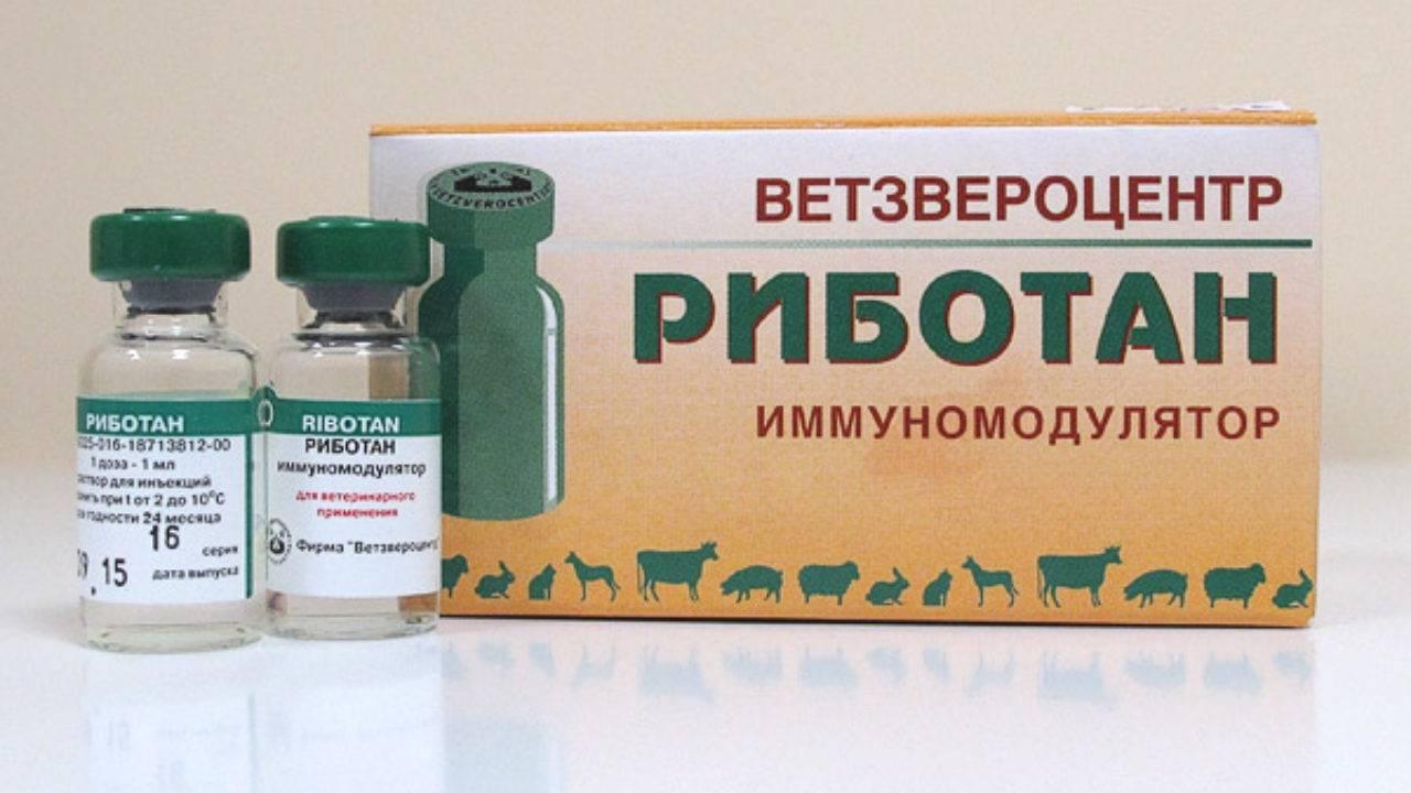 ᐉ риботан — инструкция по применению для собак - ➡ motildazoo.ru