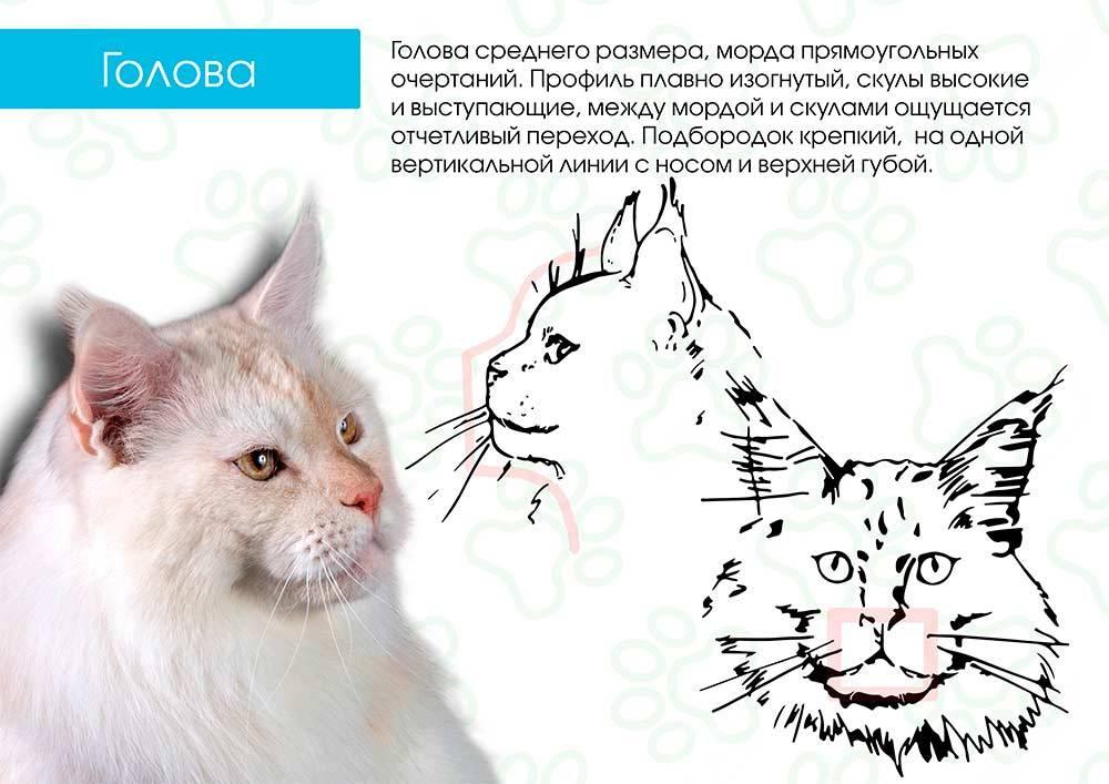 Как отличить кота от кошки: основные отличия самца от самки