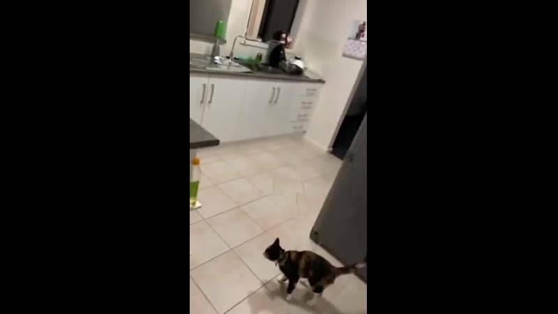 Как отучить кота лазить по столам — методы отбить охоту шкодить
