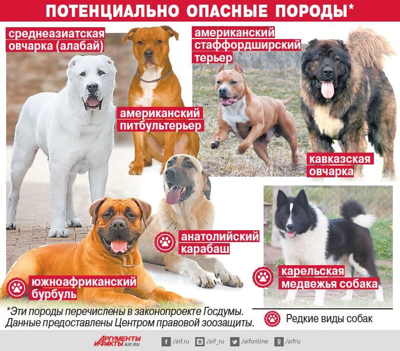 Топ-10 лучших русских пород собак. фото и описание