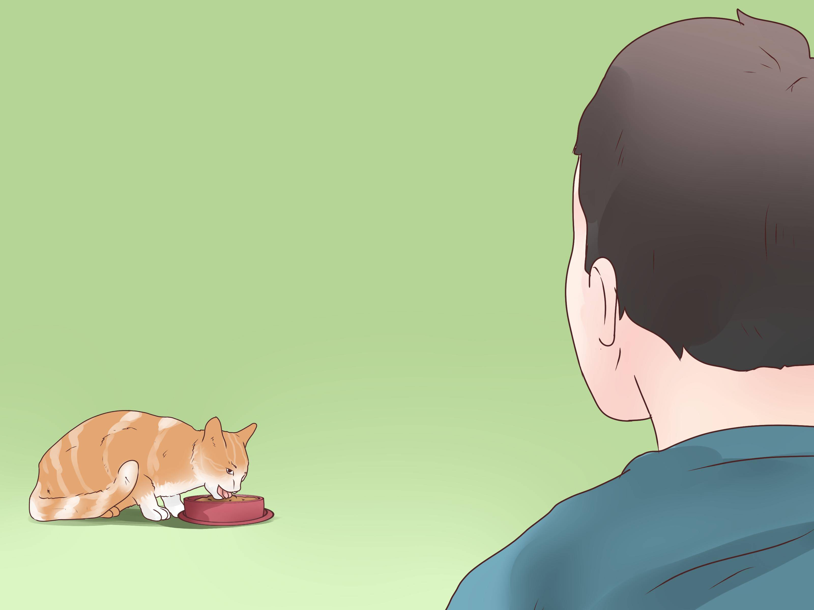 Бывает ли у кошек эпилепсия