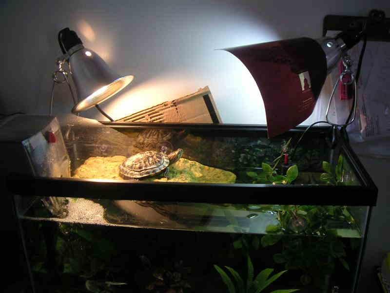 Какую уф лампу выбрать для террариума черепахи