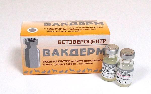 Вакдерм для кошек | вакцина от лишая