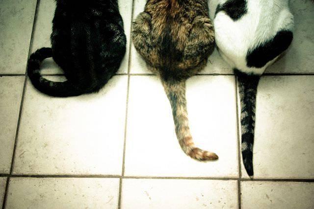 Весеннее обострение у кошек: особенности и что делать?