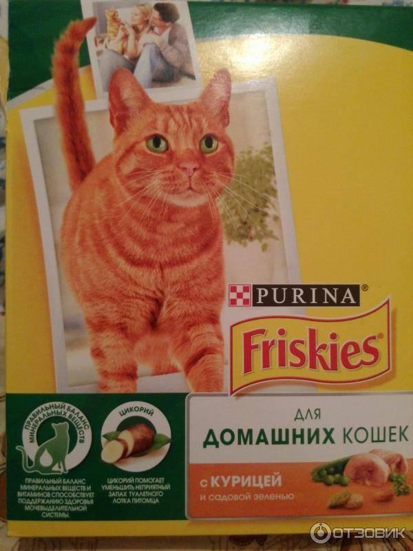 Корм «фрискис» для кошек: обзор, состав, ассортимент «фрискас», плюсы и минусы, отзывы ветеринаров и владельцев