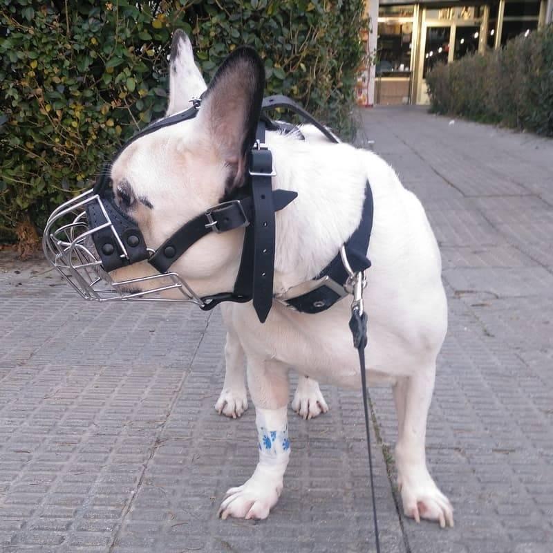 Одежда для французского бульдога, комбинезон для собаки, обувь, игрушки и аксессуары, выкройка комбинезона своими руками.