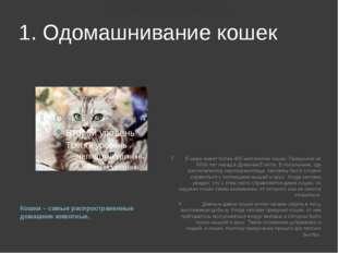 Как приучить котенка к рукам: простые и полезные советы