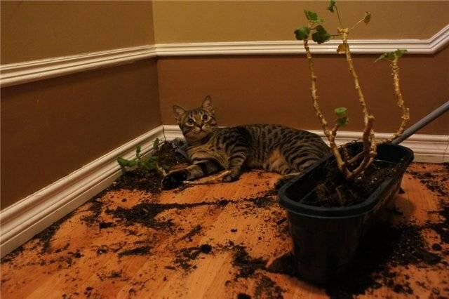 Ядовитые растения для кошек: как помочь при отравлении?