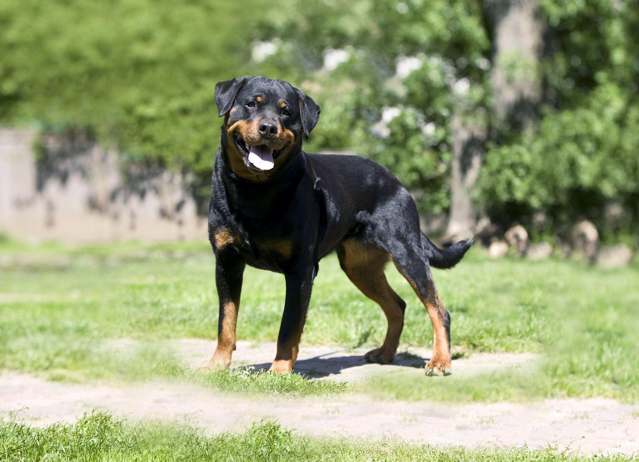 Дратхаар собака. описание, особенности, уход и цена дратхаара | sobakagav.ru