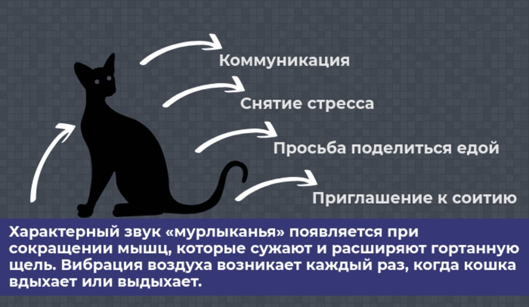 Учим кошачий язык общения — мяуканье кошек!