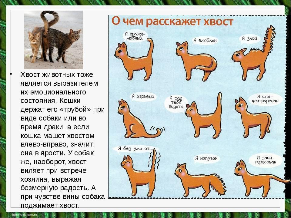 Собачья речь — как понять, что собака говорит нам?   аквариумные рыбки