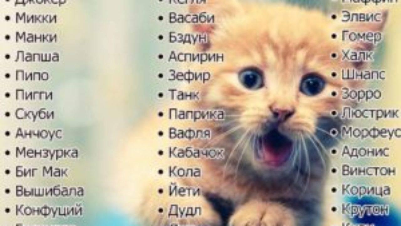 Как выбрать клички для котов-мальчиков?