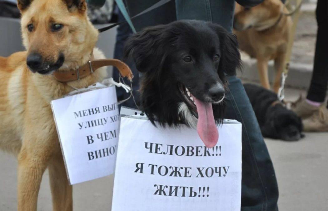 Отстреливать или стерилизовать: бродячие собаки убивают, зоозащитники и власти спорят