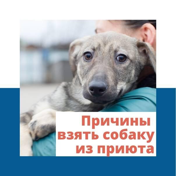 Как вести себя с собакой, которую взяли из приюта