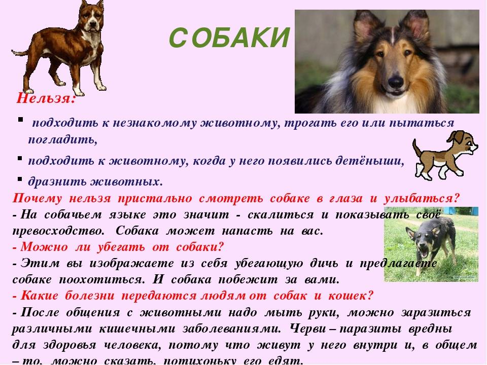 Как взять собаку из приюта: 14 шагов (с иллюстрациями)