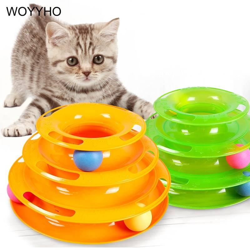Самые умные кошки: топ 10