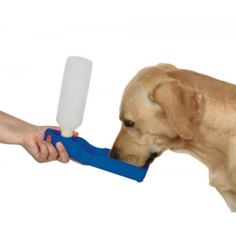 Какими могут быть поилки для собаки: обзор дорожных и переносных уличных моделей