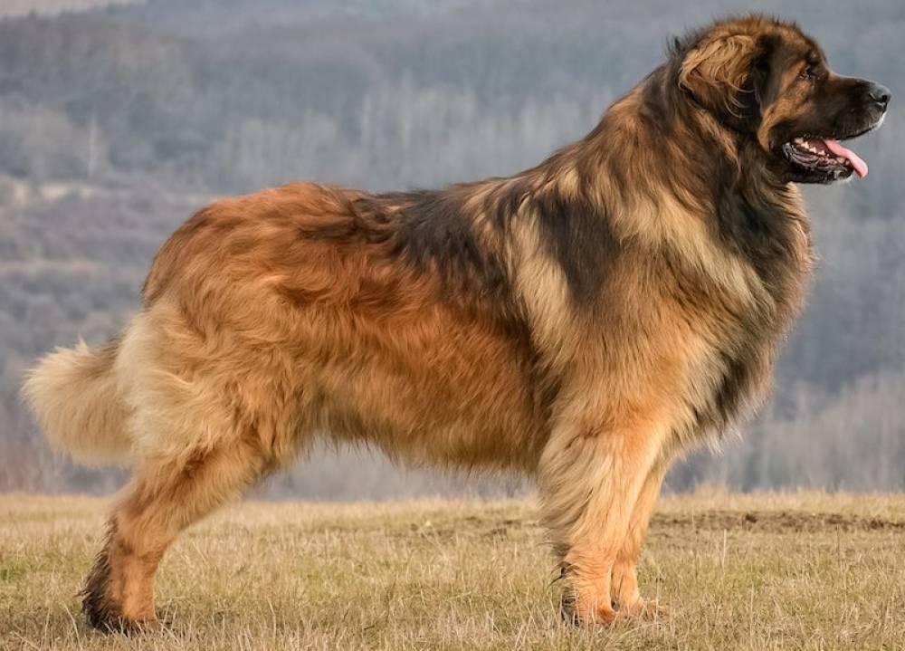 Самые добрые породы собак. какую выбрать для ребенка?