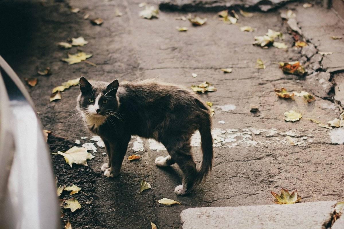 Беспородные кошки: внешний вид, особенности содержания и кормления, отличия дворовых котов - kotiko.ru