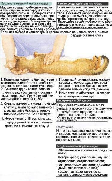 Массаж для кошек и котов во время запора: простая инструкция для хозяев, как правильно делать массаж