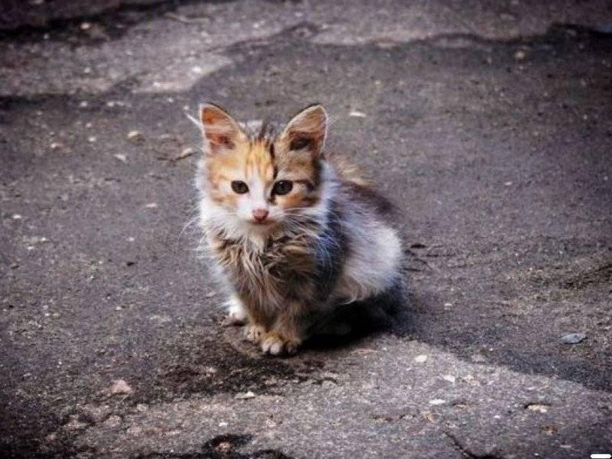 Как правильно держать кота на руках: основные правила