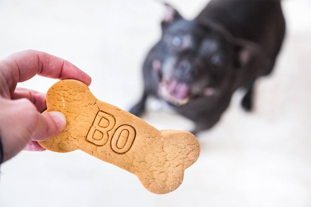 Вкусняшки и лакомства для собак