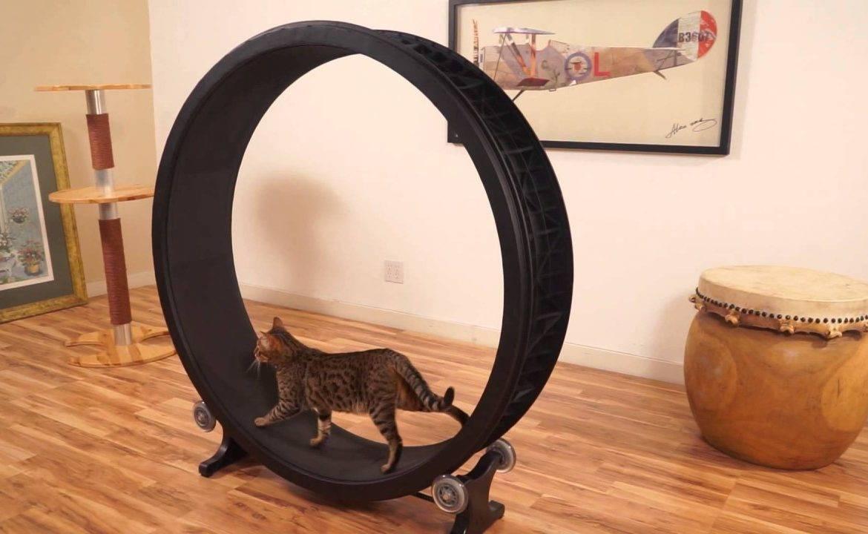 Беговое колесо для кошек: как сделать своими руками