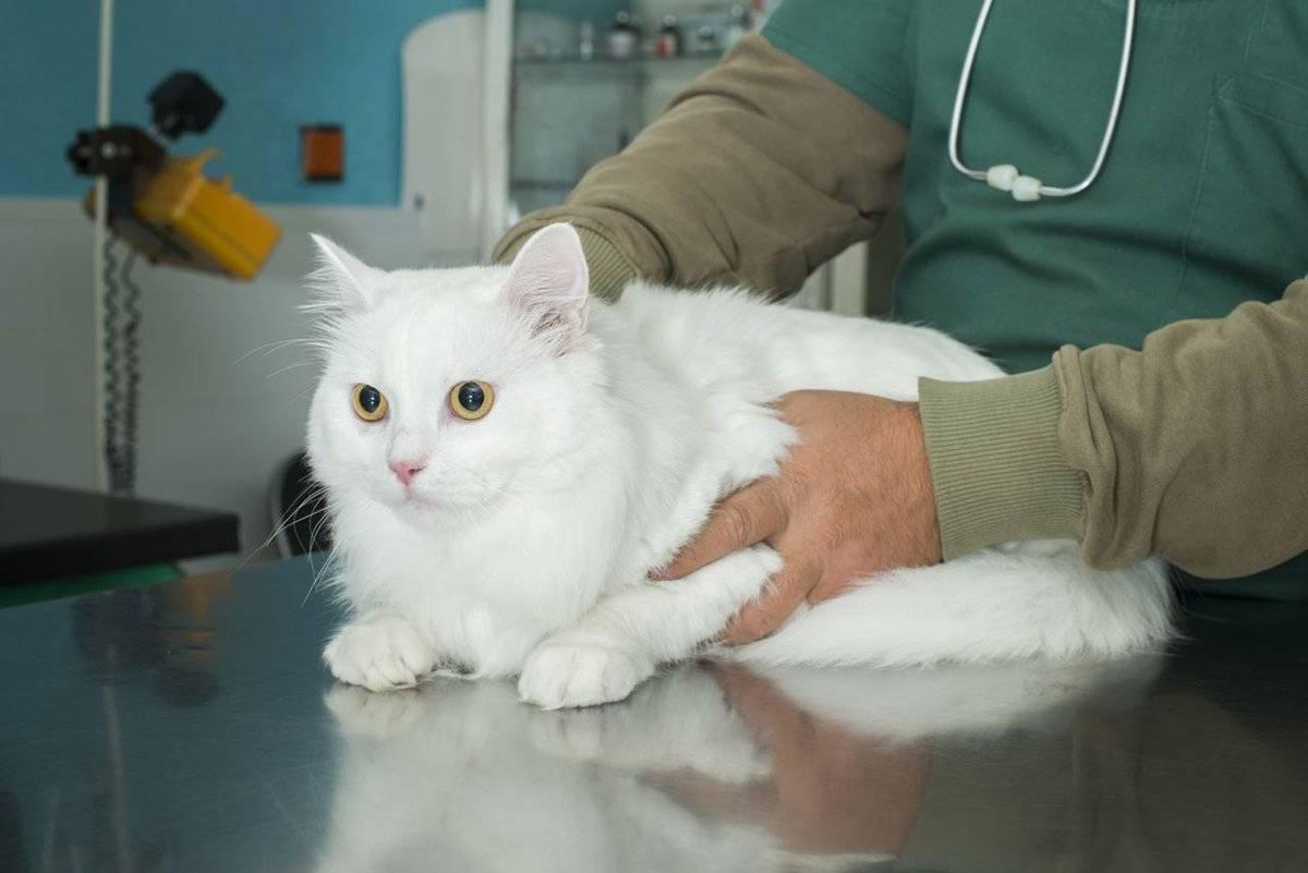 Заболевания почек у кошек и собак —симптомыилечение