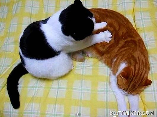 Кот делает массаж