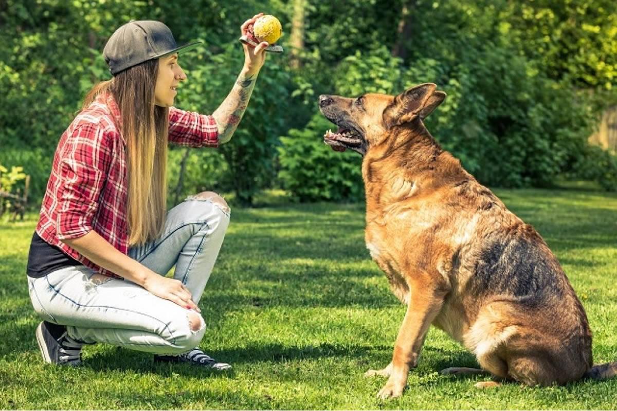 Как отучить собаку тянуть поводок на прогулке – самостоятельно