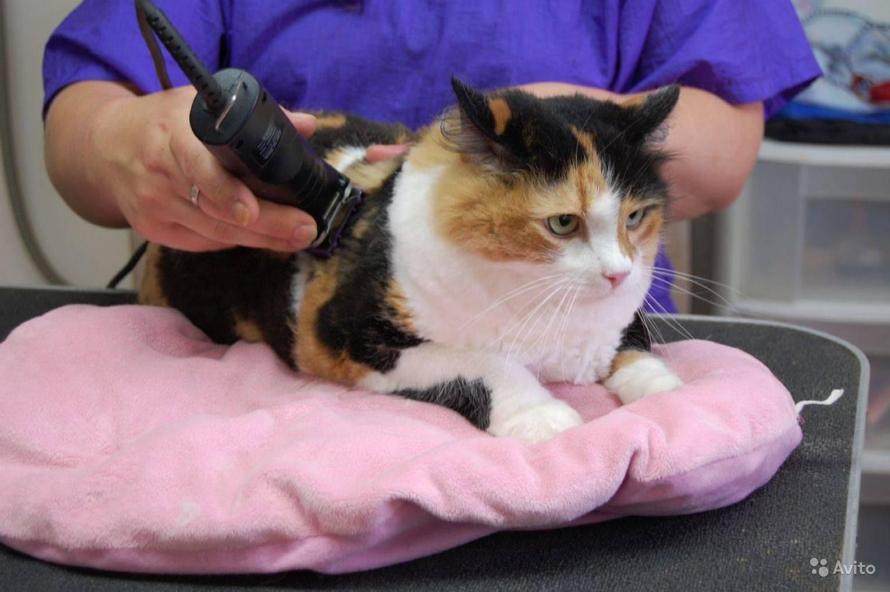 Стрижка кошек на дому и ее особенности, правила и рекомендации