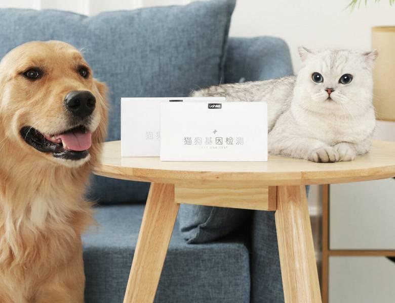 Самые умные кошки в мире: названия пород, их описания и фото