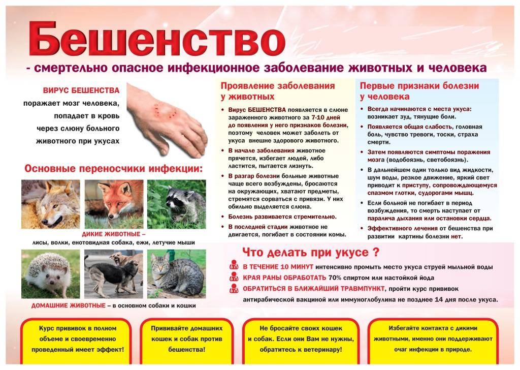 Первые признаки бешенства у кошек - как понять что у кота бешенство? - ветеринарная клиника ситивет