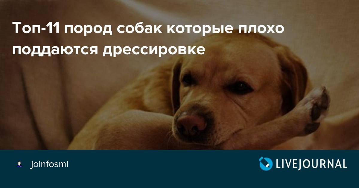 Породы собак, которые совершенно внезапно могут проявить агрессию