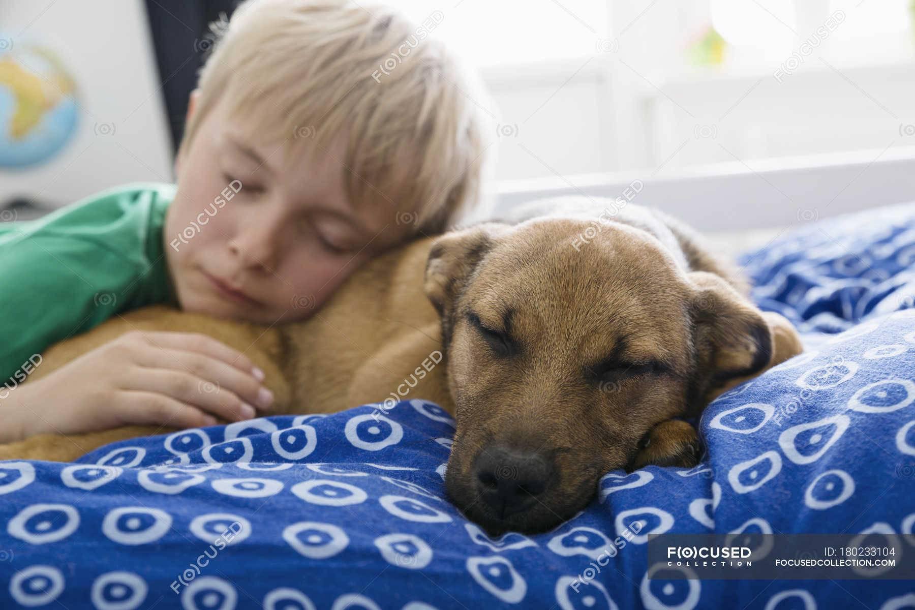Как отучить питомца от хозяйской постели
