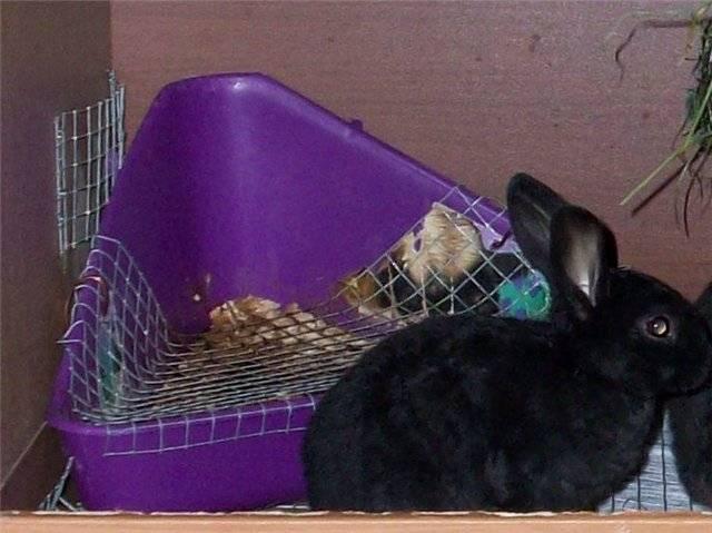Как приучить кролика к лотку самостоятепьно: инструкции и видео