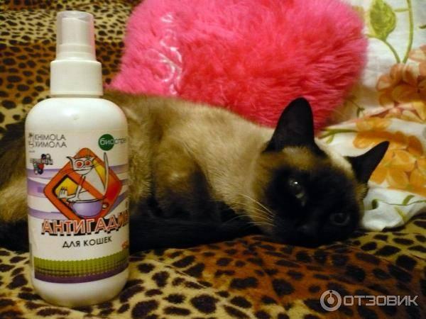 Антигадин для кошек: отзывы, инструкция по применению, противопоказания