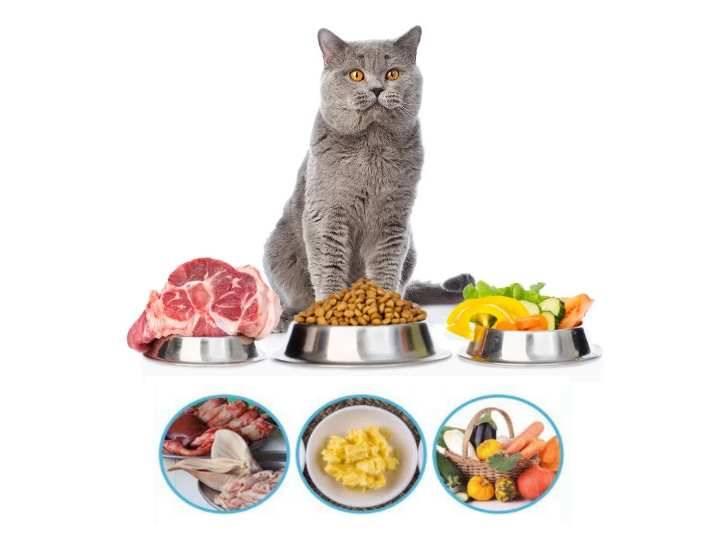 Как правильно кормить кошек: советы экспертов - лайфхакер