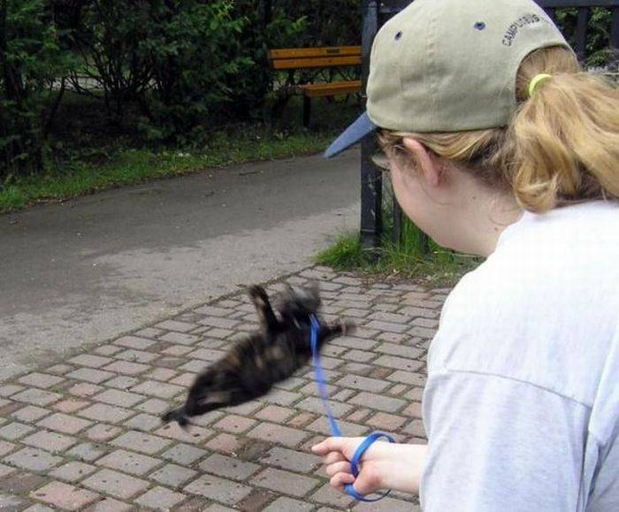 Как приучить кошку или кота ходить в туалет на улице: быстро и просто