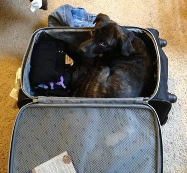 Где оставить собаку на время отпуска?