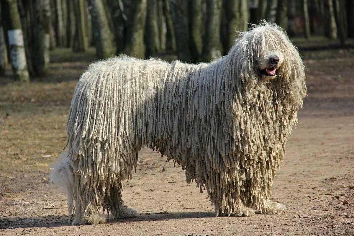 Самые редкие и необычные породы собак в россии и в мире: топ-10 с фото и названиями
