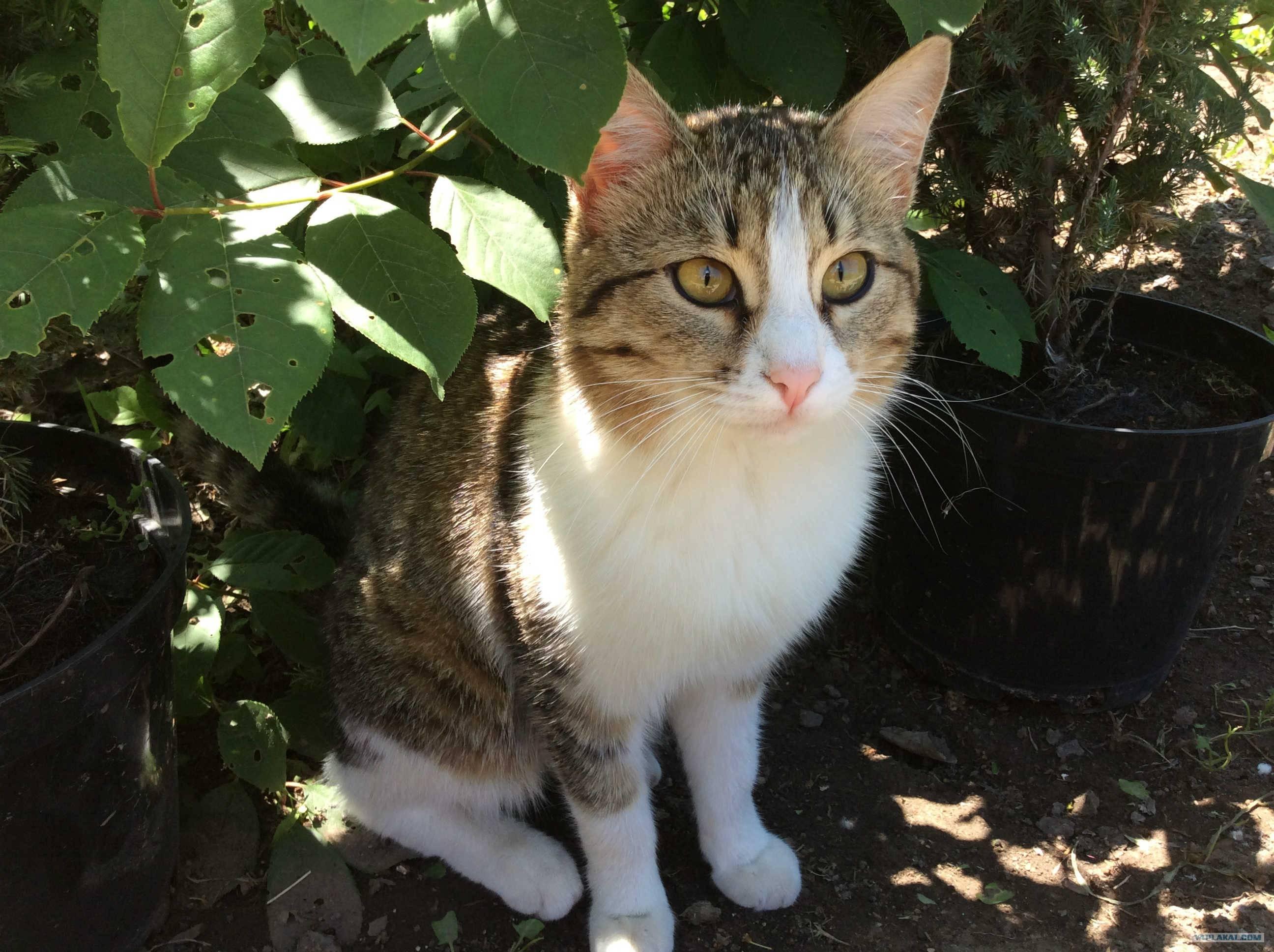 Потерялся домашний кот как найти. как искать убежавшую кошку. что необходимо взять с собой, приступая к поискам