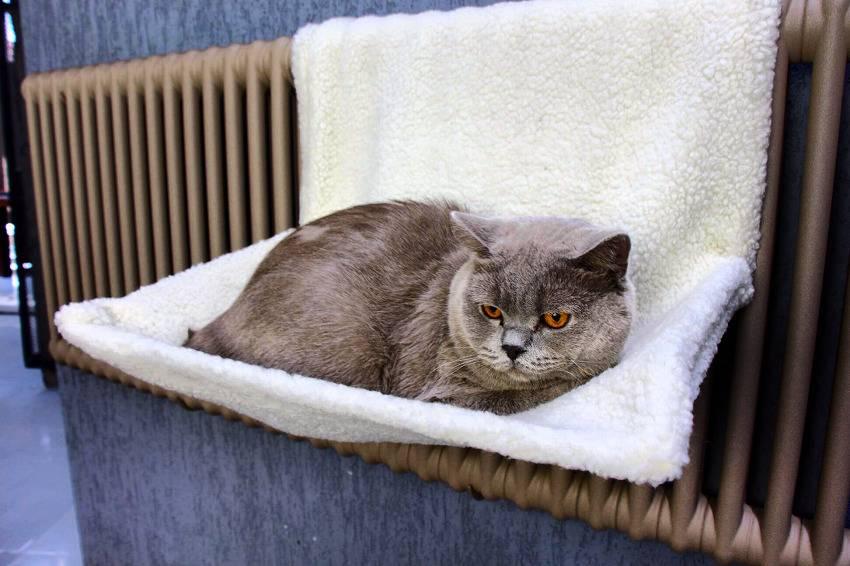 Как сделать лежанку для кошки из свитера своими руками?