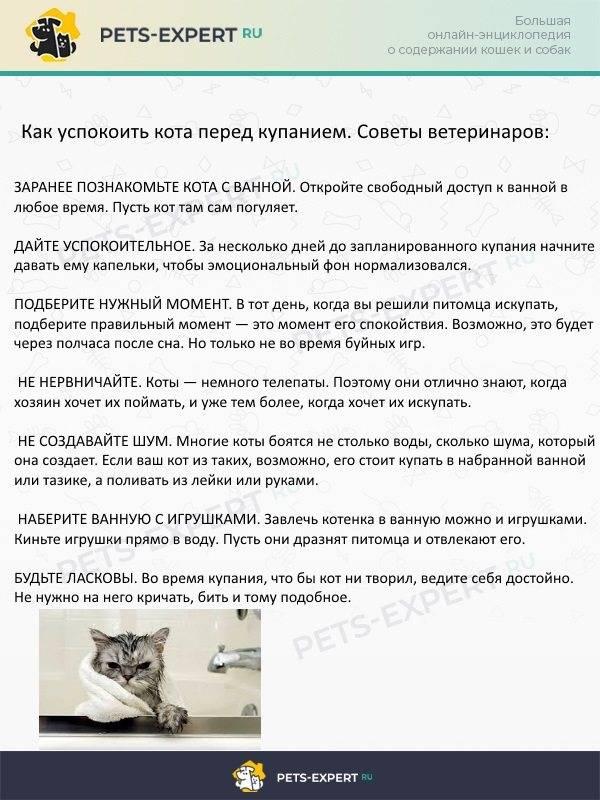 Как дать кошке таблетку правильно