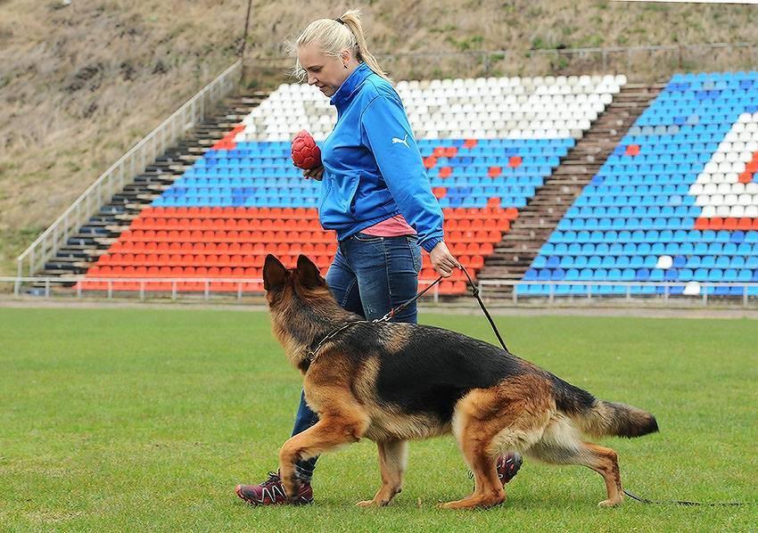 Общий курс дрессировки собаки без тренера