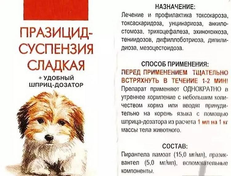 Дегельминтизация собак: правила, сроки, виды лекарственных препаратов